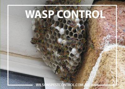 Pest Control Sydney - Wasp Control