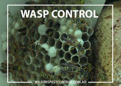 Pest Control Sydney - Wasps Control