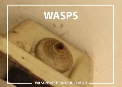 Pest Control Sydney - Wasps Nest
