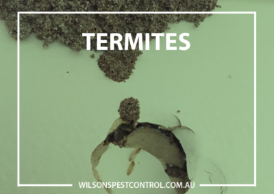 Termites v1
