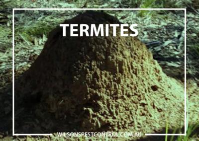 Termites v2