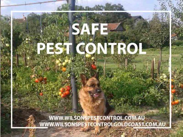 Safe Pest Control blacktown