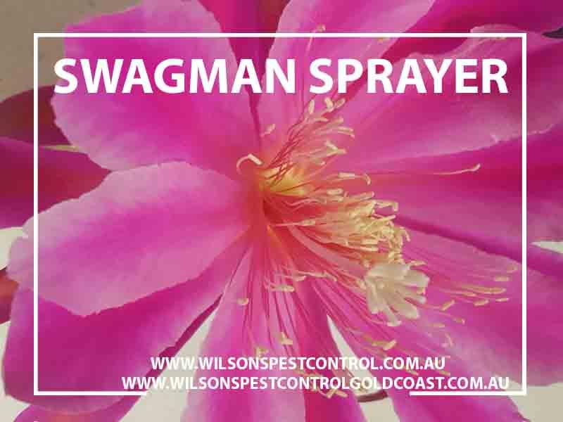 Wilsons Pest Control - Swagman Sprayer