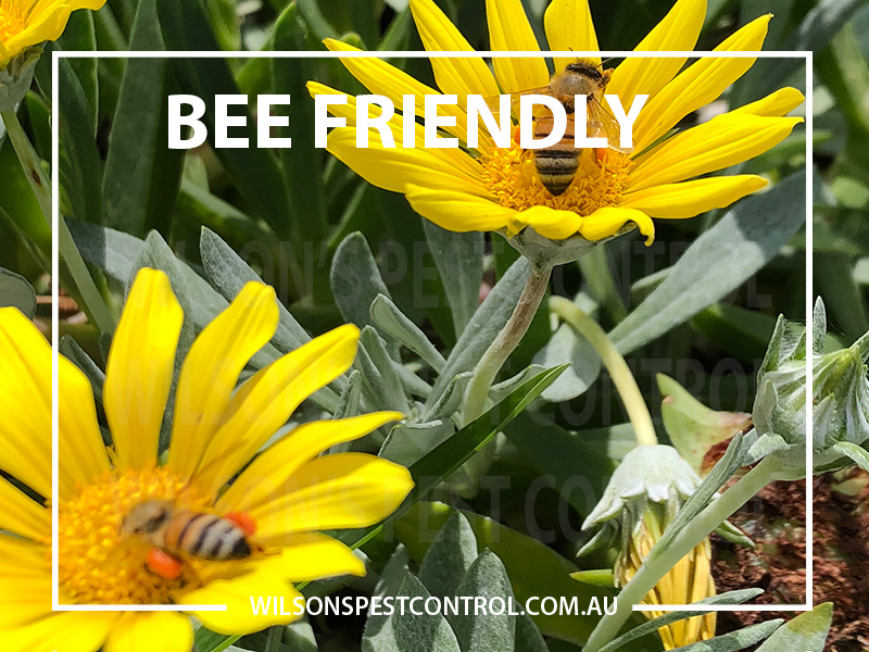 Pest Control Sydney - Bee Friendly
