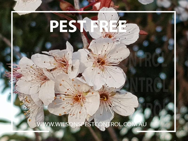 Pest Control Sydney - Pest Free