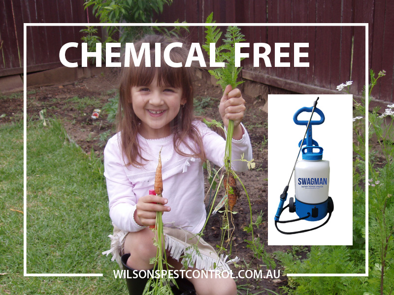 Pest Control Sydney - Chemical Free