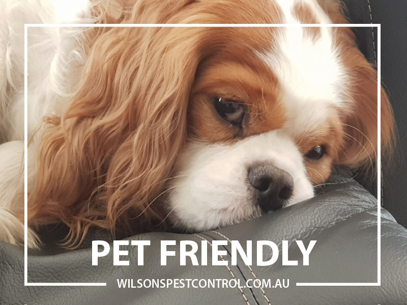 Pest Control Sydney - Pet Friendly