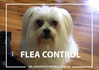 Pest Control - Blacktown - Flea Control Pets - Copy