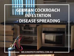 Pest Control Sydney Wilsons Pest Control German Cockroach Treatment