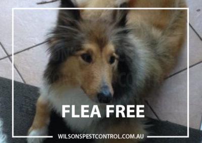 Pest Control - Flea Free Castle HIll All Pets - Copy