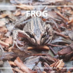 Frog chemical free waterways Pest Free