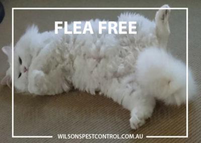 Wilsons Pest Control - Pest & Flea Free - Copy