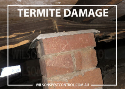 Termite Damage - Wilsons Pest Control Blacktown
