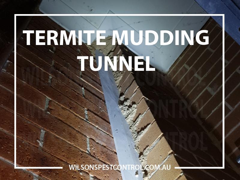 Termite Control Termite Zone
