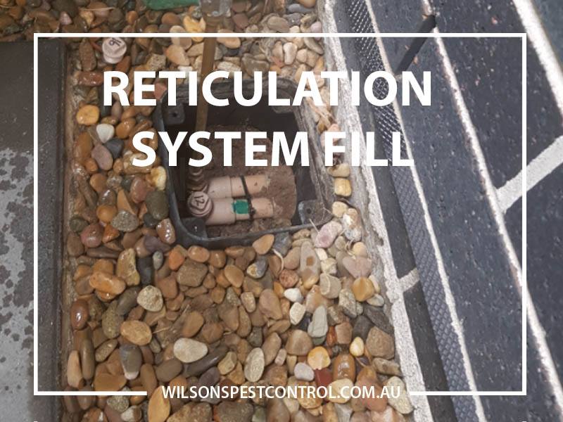 TErmite Reticulation Fill Termite Reticulation hose fill Castle Hill