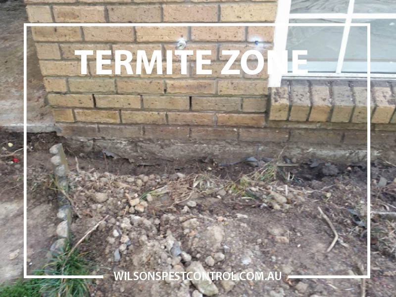 Wilsons Pest Control Termite Barrier Installation