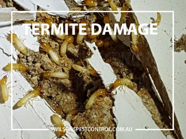 Termites Treatment - Termite Dusting - Termite Baiting