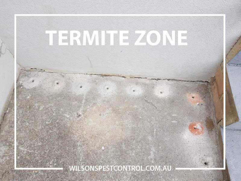 Termite Treatment Wilsons Pest Control - Blacktown & Gold Coast