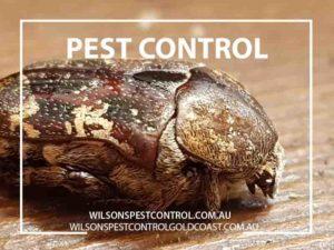 Beetles & Bugs - Wilsons Pest Control Holroyd, blacktown