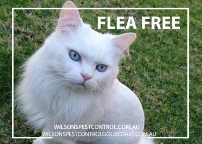 Pest Control Flea free Blacktown Sydney Gold Coast