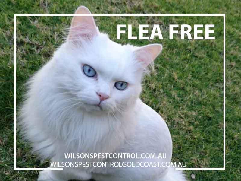 Pest Control Flea free Blacktown Sydney