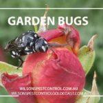 Pest Control Garden Bug Blacktown & Holroyd