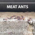 Western Sydney Ant Treatments Blacktown & Holroyd