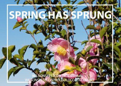 Pest Control - Spring has Sprung - Wilsons Pest Control Gold Coast & Sydney