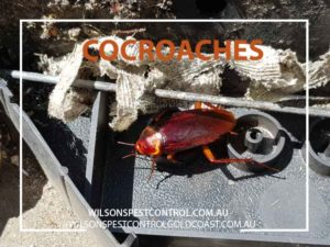 Pest Control Wilsons Pest Control - Cockroaches Holroyd & Blacktown