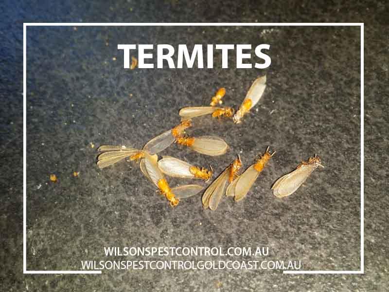 Termite Treatment Western Sydney Castle HIll