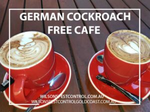 Wilsons Pest Control How to get rid of German Cockroaches Blacktown