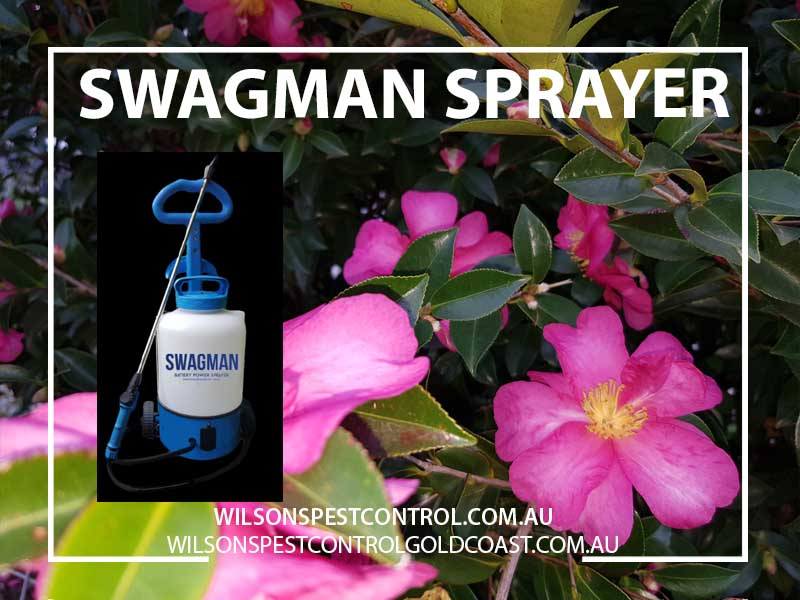 Pest Control Blacktown Eco Friendly, Wilsons Pest Control Termite Swagman Electric Sprayer Supplier