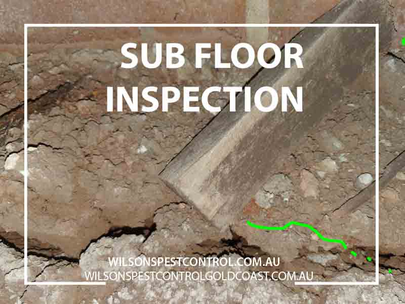 Termite Inspections Fipforce Aqua, Wilsons Pest Control Termite sub floor inspection Dundas Valley Sydney