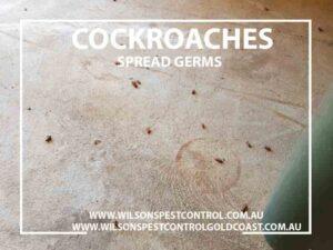 Wilsons Pest Control Cockroaches Blacktown & Holroyd