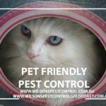 Wilsons Pest Control Fleas Pet Friendly Blacktown