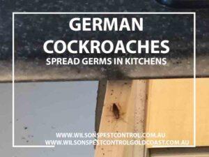 Wilsons Pest Control German Cockroaches Blacktown & Holroyd