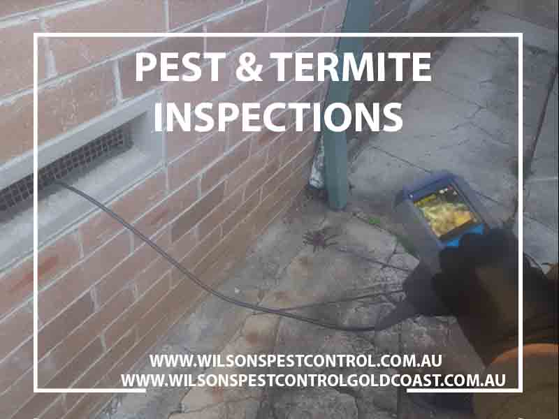 Wilsons Pest Control Termite Inspection Blacktown Kenthurst