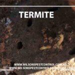 Wilsons Pest Control Termite Treatment, Blacktown Castle Hill Western Sydney