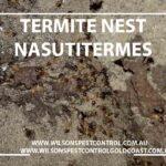 Termite treatment blacktown & Holroyd pest control
