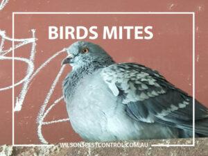 Birds & Mites Pest Control blacktown & Holroyd
